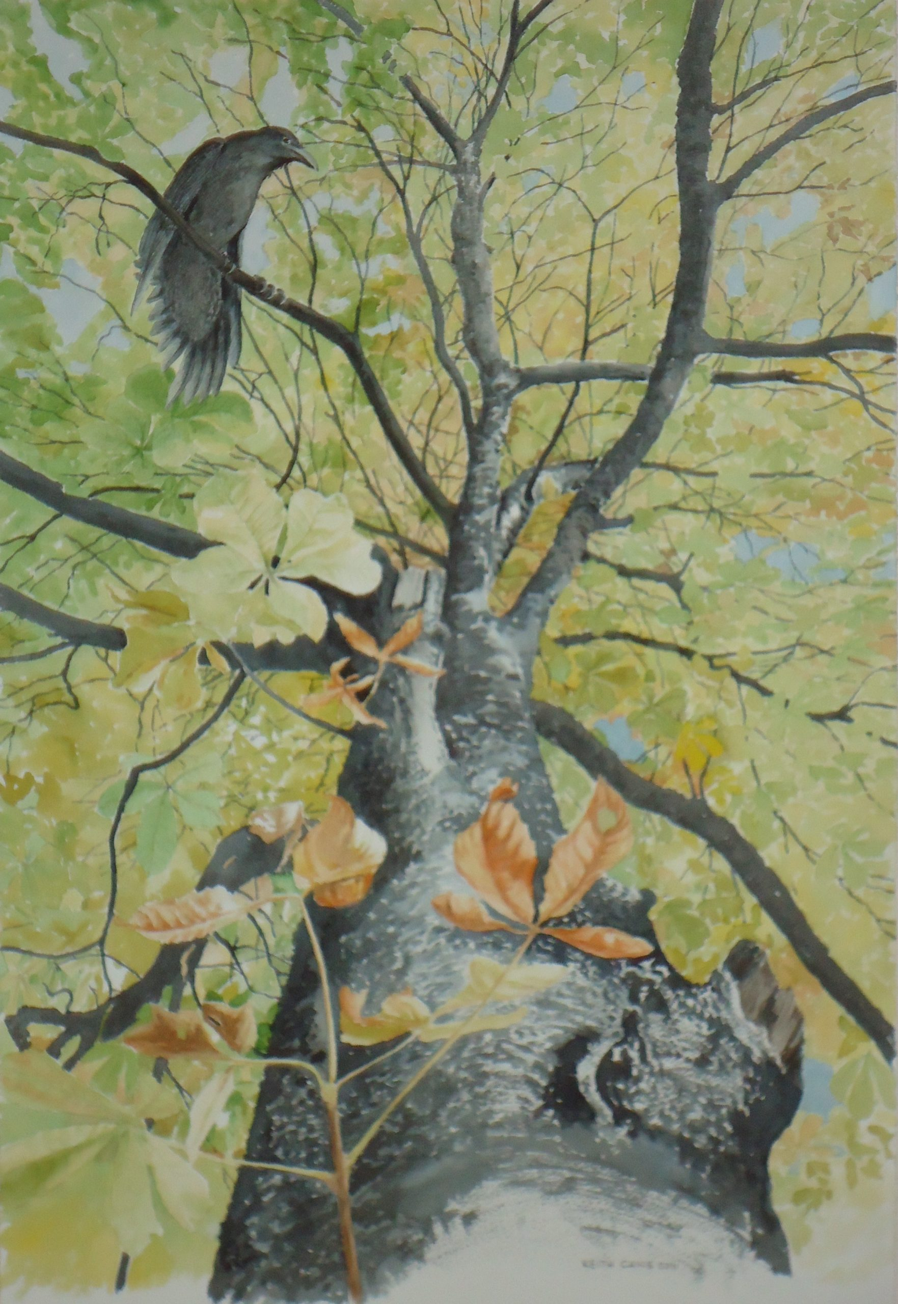 Raven in a Chestnut Tree