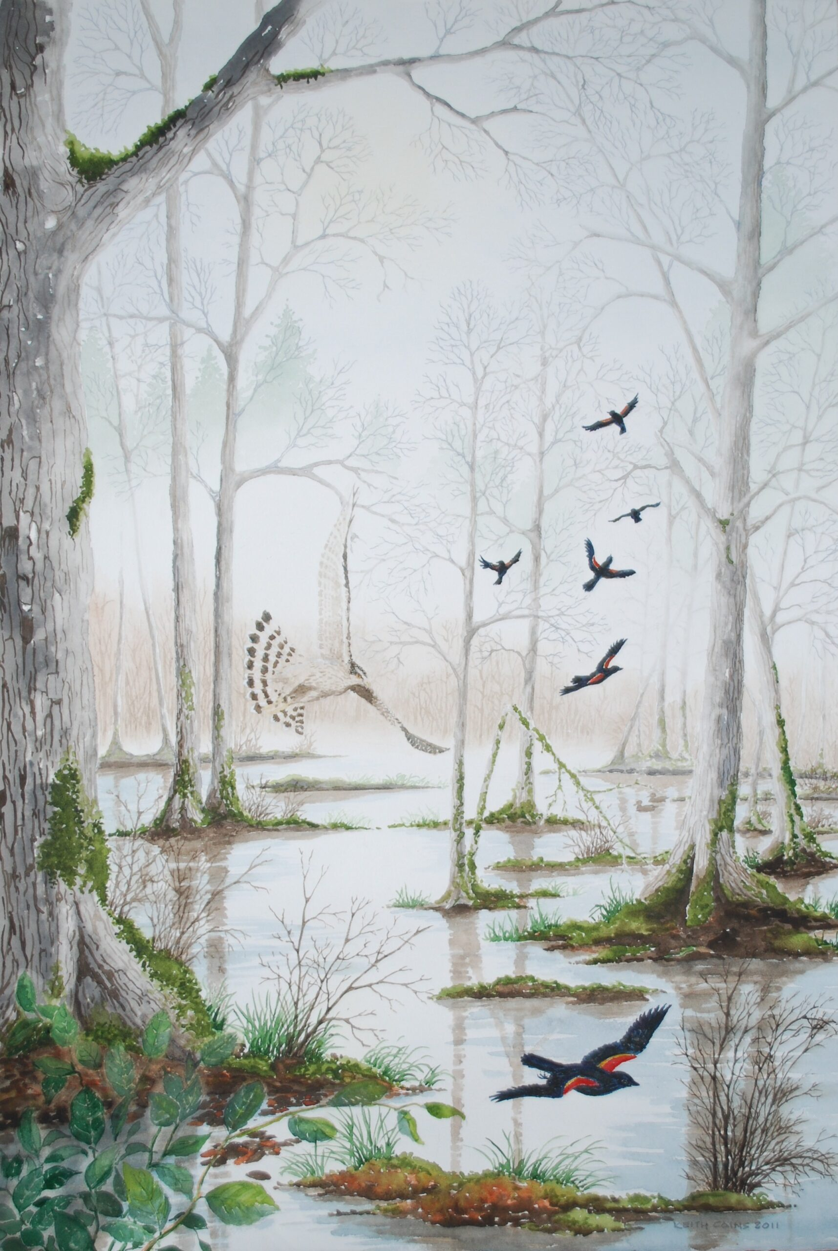 A water colour painting of a goshawk and some redwing blackbirds in a forest setting by Keith Cains.